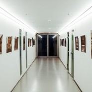 Фестиваль «Вазари» 2020 фотографии