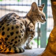 Зоопарк «Лимпопо»  фотографии