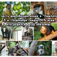 День обезьян в зоопарке «Лимпопо» фотографии