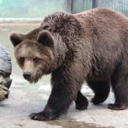 Подготовка к зимнему периоду в зоопарке «Лимпопо» 2020 фотографии
