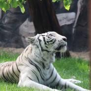 Лето в зоопарке «Лимпопо-2021» фотографии