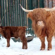 Год Быка в нижегородском зоопарке «Лимпопо»2021 фотографии