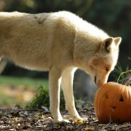 """Хеллоуин в зоопарке """"Лимпопо"""" 2018 фотографии"""