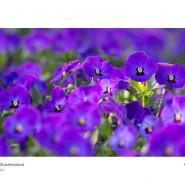 Выставка  «Вдохновение цветов. Краски новой жизни» фотографии