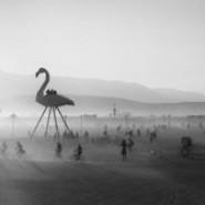 Выставка «Игры со светом» фотографии
