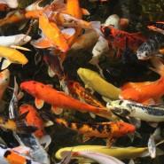 Весенний переезд животных в нижегородском зоопарке «Лимпопо» фотографии