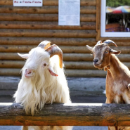 Нижегородский зоопарк «Лимпопо» возобновляет свою работу фотографии