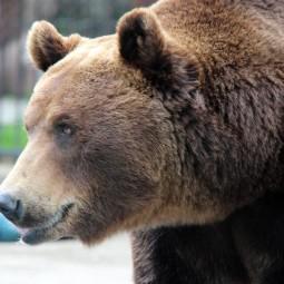 Подготовка к зимнему периоду в зоопарке «Лимпопо» 2020