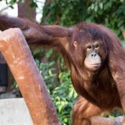 День обезьян в зоопарке «Лимпопо»