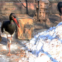 Весна в зоопарке Лимпопо 2021