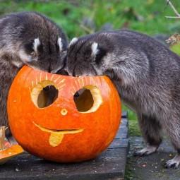 """Хеллоуин в зоопарке """"Лимпопо"""" 2018"""
