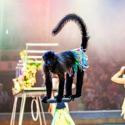 Новый сезон Нижегородского государственного цирка 2016
