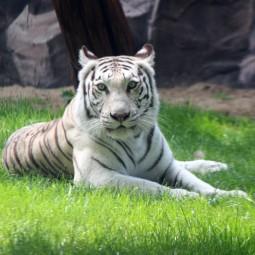 Лето в зоопарке «Лимпопо-2021»