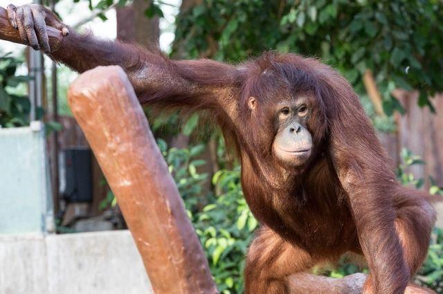 День обезьян взоопарке «Лимпопо»