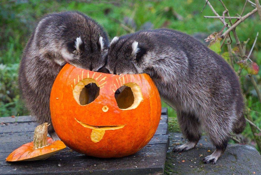 Хеллоуин взоопарке «Лимпопо» 2018