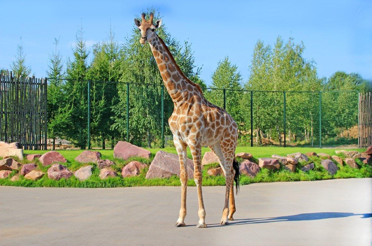 Нижегородский зоопарк «Лимпопо» возобновляет свою работу
